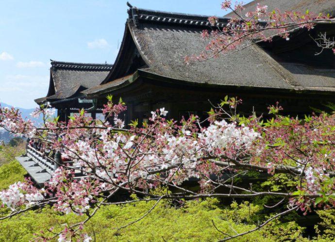 sakura-kiyomizudera