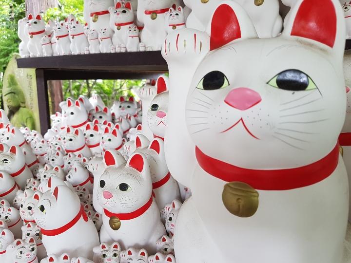 temple des chats